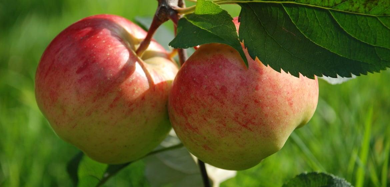 Apfel- Zitronenverben Espuma